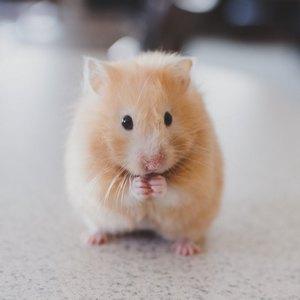 Male životinje